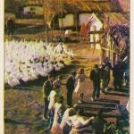 skupljaci perja
