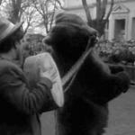 tri medved